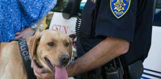 Police dog shown grinning
