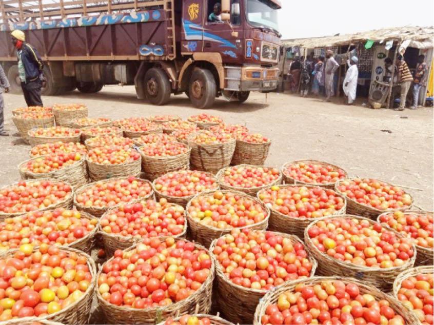 Kano-tomato-onion-farmers-marketer-1.jpg
