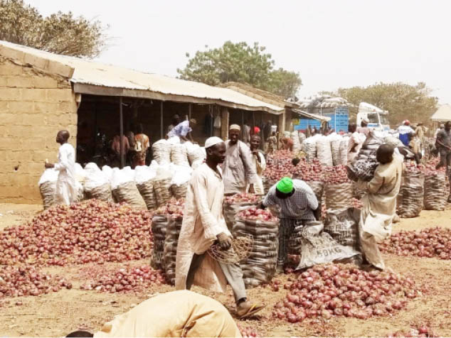 Kano-tomato-onion-farmers-marketer-1s.jpg