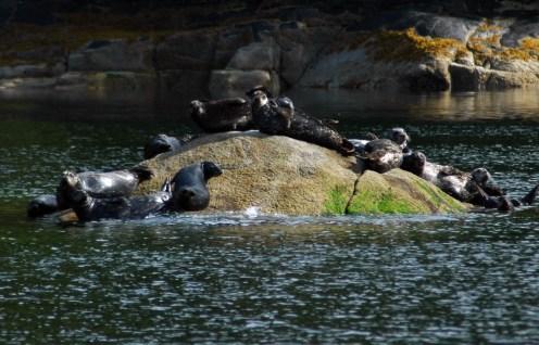 Seals_01