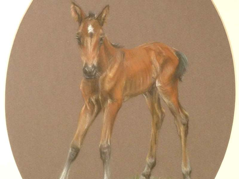 Judy Goodman, Bay Foal, horse