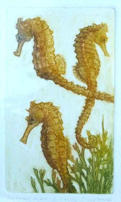 Seahorses Etching by Valerie Christmas