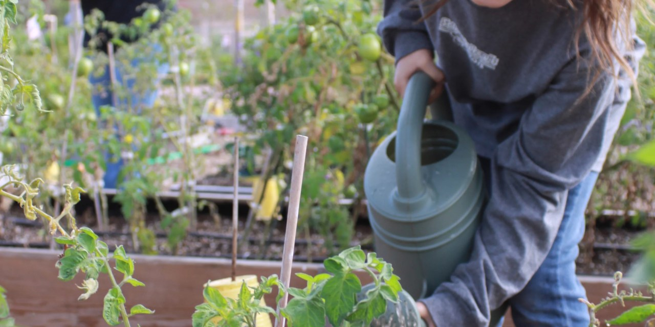 Gardening for good with Sunflower Roots & Shoots