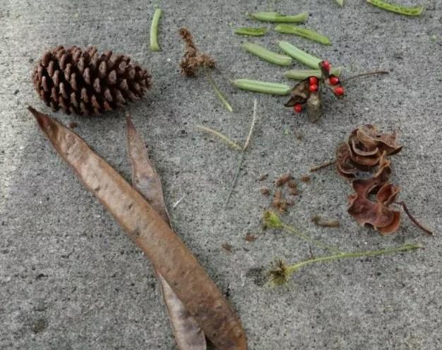 Seed Scavenger Hunt = Play + Nature + Art