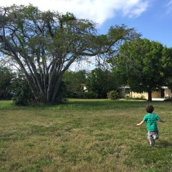 April 2015 - Boy and tree