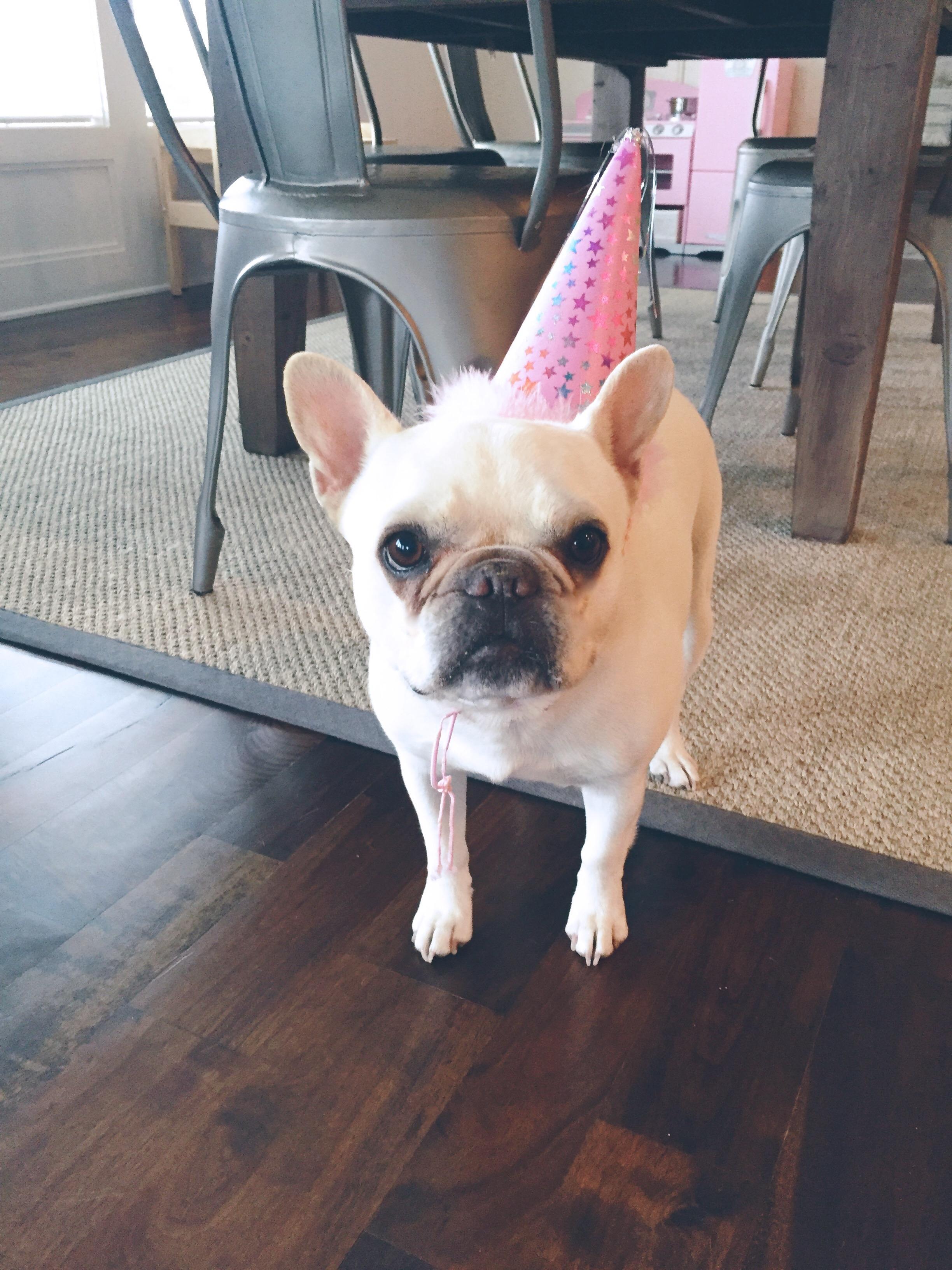 French Bulldog Birthday Hat