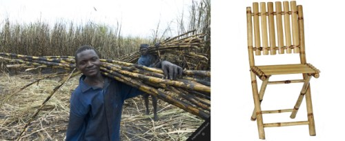 sugarcane_research4
