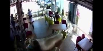 Sahibinden kaçan kurbanlık boğa kafeye girdi.