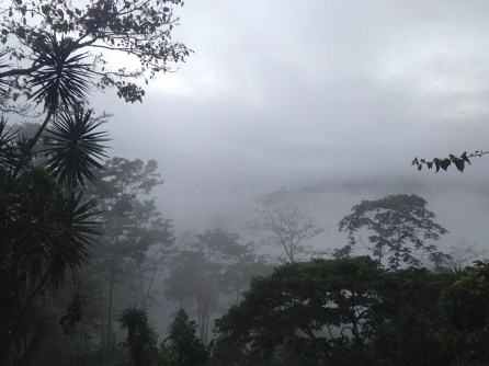 I keep showing you pictures of the view of the valley from my porch and everytime, to me, it looks so different. This morning, filled with clouds and then the rains came.