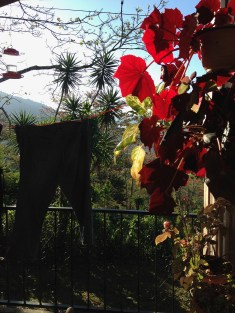 Sunshine on the begonias and my jeans drying on the line.