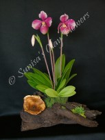 Paph. Lady Slipper #13 17 x 11 inches, $185
