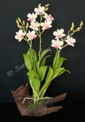 (SOLD OUT) Dendrobium #01, 17 x 9 in