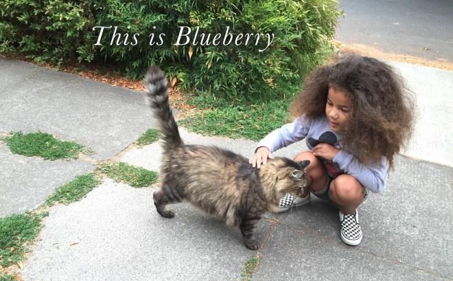 fd4dc-blueberry