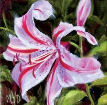 Pink Lily by Mary Van Deman