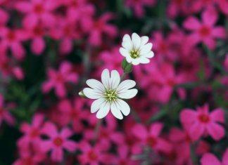 Маленький цветок как маленькая девочка