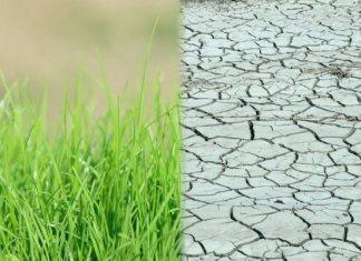 Хадис о намерении - земля плодородная и сухая