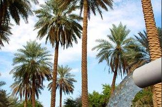 http://www.hodaalquran.com/thump/plants/naqala1.jpg