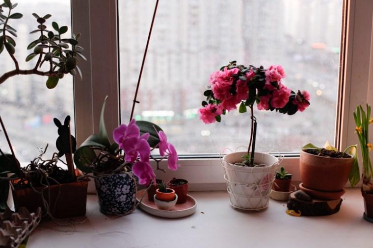 my spring girls-3