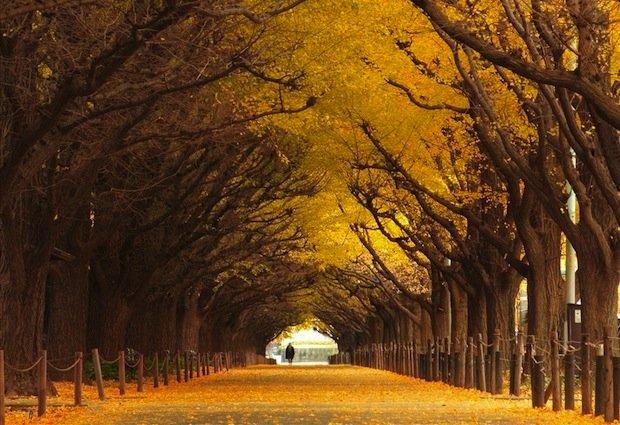 Σήραγγες από δέντρα12