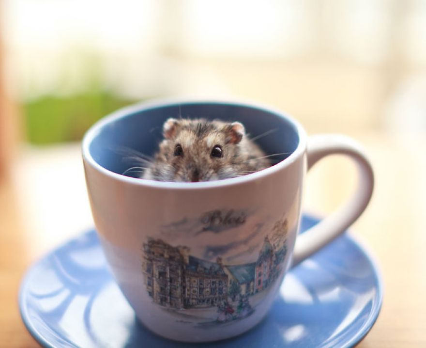 Ποντικάκι1