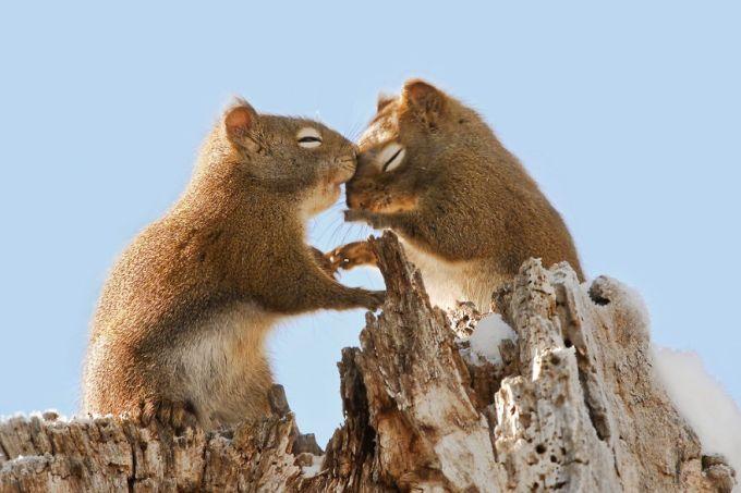 Ζευγάρια ζώων που αποδεικνύουν ότι η αγάπη υπάρχει και στο ζωικό Βασίλειο 11