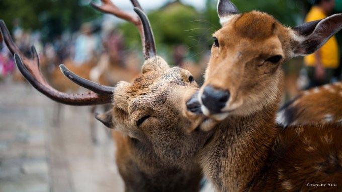 Ζευγάρια ζώων που αποδεικνύουν ότι η αγάπη υπάρχει και στο ζωικό Βασίλειο 14