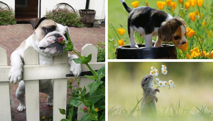 Ζωάκια μυρίζουν λουλούδια και μας τρελαίνουν – οι ωραιότερες φωτογραφίες που θα δείτε σήμερα