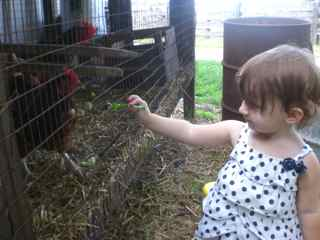 Alexis feeding the Chickens