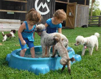 My Granddaughters & the dogs Having a BLAST in the Pool!!