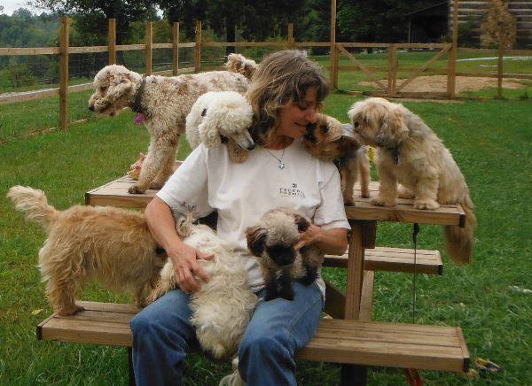 Breeding small hypo-allergenic non-shedding puppies