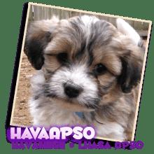 Havapso