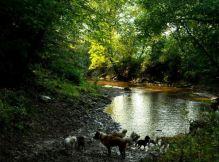 ManyDogs Creek_n