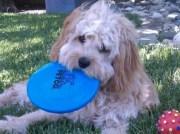 BaileyFrisbee