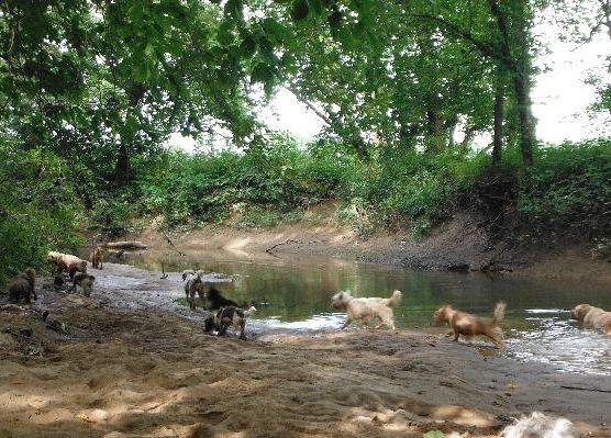 Puppies for sale Ohio breeder