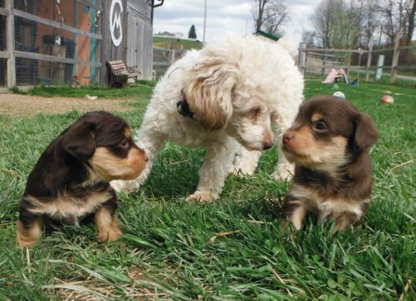 Dixie with her new little ones.