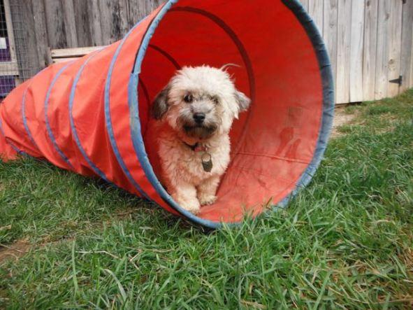 Non-shedding & Hypo-allergenic dogs Breeder puppies for sale Ohio