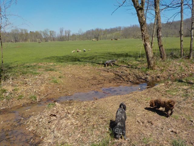 enjoying spring and loving life