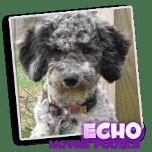 Mommy - Echo