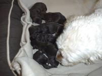 Lily & her 7 babies!