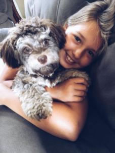 Small non-shedding hypo-allergenic Puppies