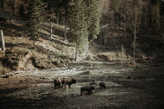 biesy - www.karolnycz.com -62