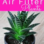 7 Best Indoor Plants to Filter your Air