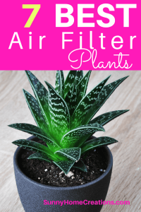 10 Best Air Filtering and Cleaning Indoor House Plants
