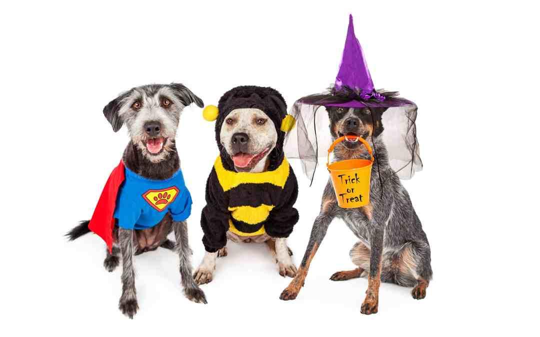 10 Dog Halloween Costumes