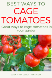 best ways to cage tomatoes