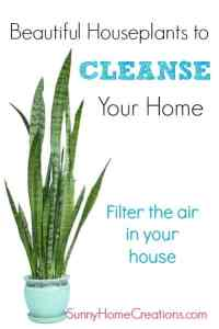 Best houseplants to cleanse your home.  Filter the air in your house.