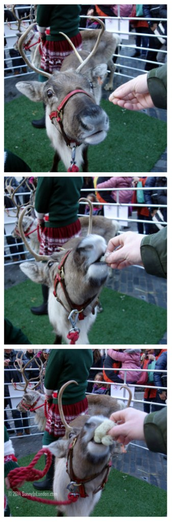 Things to Do in Covent Garden London, Pet the Reindeer!