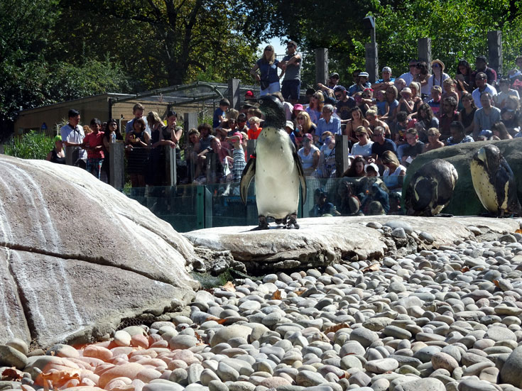 Visiting London Zoo Tips penguins