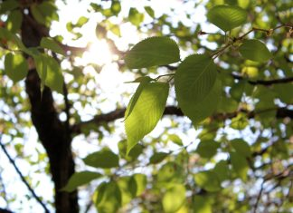 Sunlit leaves Sunny Journeys