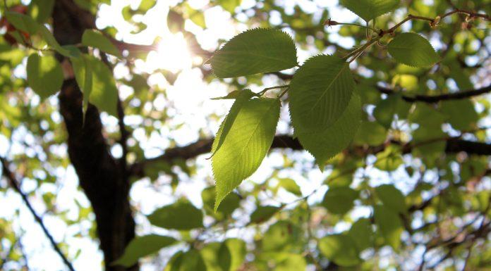 Sunlit leaves Sunny Journeys